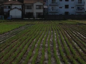 貸農園2.JPGのサムネール画像