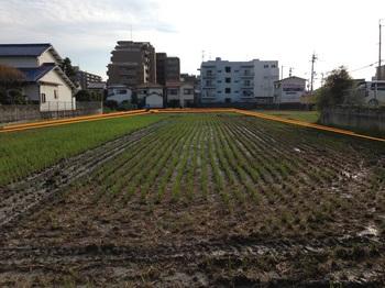 貸農園4.JPGのサムネール画像